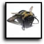Lakewood Ranch, FL Bee & Wasp Removal Service