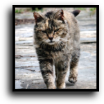 West Palm Beach, FL Feral Cat Removal Service