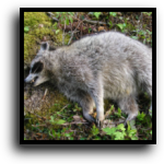 Englewood, FL Dead Animal Removal Service