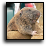Lakewood Ranch, FL Gopher Removal Service