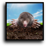 West Palm Beach, FL Mole Removal Service