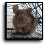 Englewood, FL Rat & Mouse Removal Service