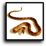 Lakewood Ranch, FL Snake Removal Service