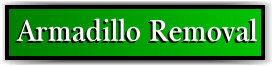 Coconut Creek, FL Armadillo Removal