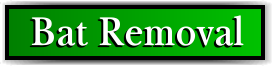Coconut Creek, FL Bat Removal