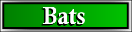 Plantation, FL Bat Removal Service