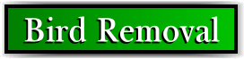 Coconut Creek, FL Bird Removal