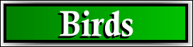 Coconut Creek, FL Bird and Pigeon Removal Service