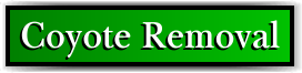Coconut Creek, FL Coyote Removal