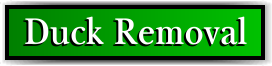 Coconut Creek, FL Duck Removal