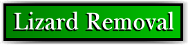 Coconut Creek, FL Lizard Removal