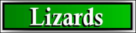 Miami Gardens, FL Lizard and Iguana Removal Service