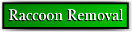 Coconut Creek, FL Raccoon Removal