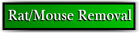 Coconut Creek, FL Rat Removal and Rodent Control