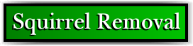 Coconut Creek, FL Squirrel Removal