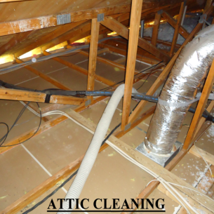Animal Rangers Attic Insulation Removal Services