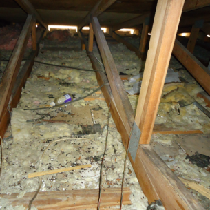 Animal Rangers Attic Cleaning and Restoration Services