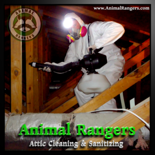 Animal Rangers Sanitizing Services