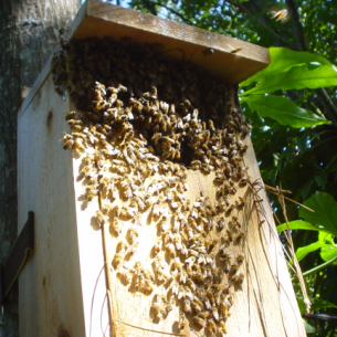 Martin County, FL Bee Removal Specialists