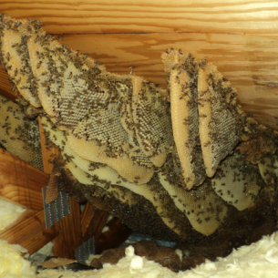 Get Rid of Bees in the Attic or Roof - Martin County, FL