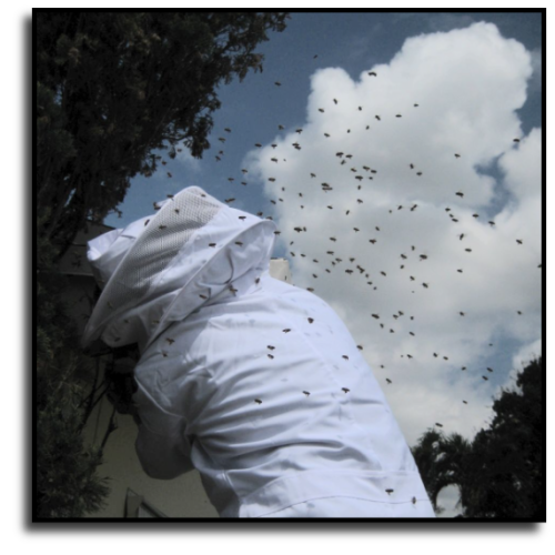 Miami-Dade County Bee Removal