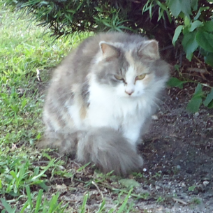 Feral Cat Removal Services in Davie, FL