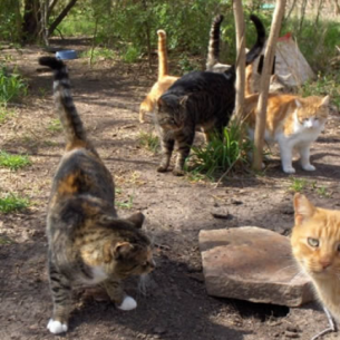 Broward County Feral Cat Control Services