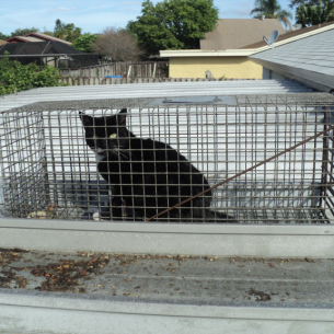 Davie, FL Feral Cat Trappers