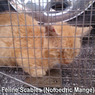 Davie, FL Animal Control - Feral Cat Removal