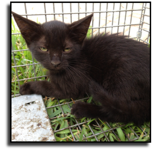 Miami-Dade County Cat Control
