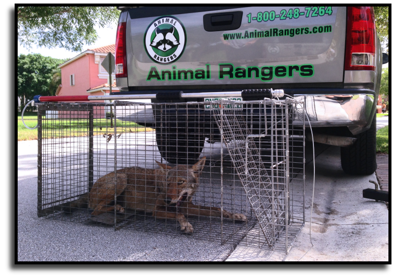Palm Beach County Wildlife Management Services