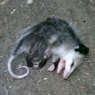 Dead Animal Removal and Control in Broward County