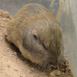 Get Rid of Gophers - Broward County Animal Control