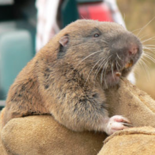Cooper City, FL Gopher Control Services