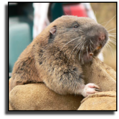 Tequesta, FL Gopher Removal Service