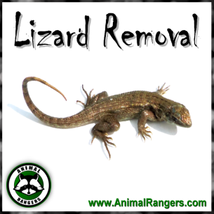 Animal Rangers Lizard Control Services
