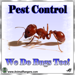 Broward County Pest Control Service