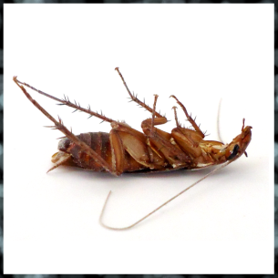 Get Rid of Roaches - Broward County