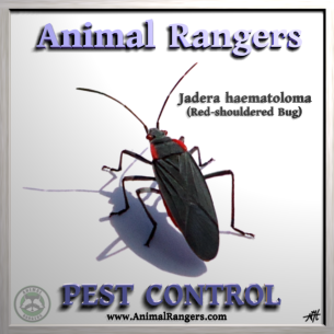 Pest Control Services in Broward County