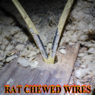 Broward County Rat Exterminators and Pest Control Services