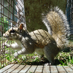 Nuisance Squirrel Removal Services in Broward County, FL