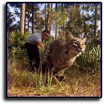 Cat Control Coconut Creek, FL Animal Rangers Nuisance Wildlife Removal & Pest Control Services