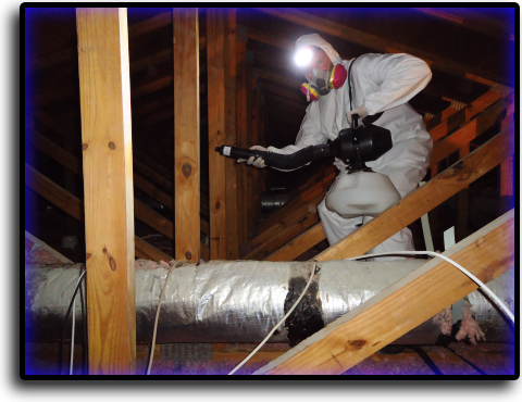 Attic Cleaning North Palm Beach, FL Animal Rangers Nuisance Wildlife Removal & Pest Control Services