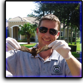 Bat Removal Pompano Beach, FL Animal Rangers Nuisance Wildlife Removal & Pest Control Services