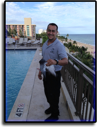 Pigeon Control North Palm Beach, FL Animal Rangers Nuisance Wildlife Removal & Pest Control Services