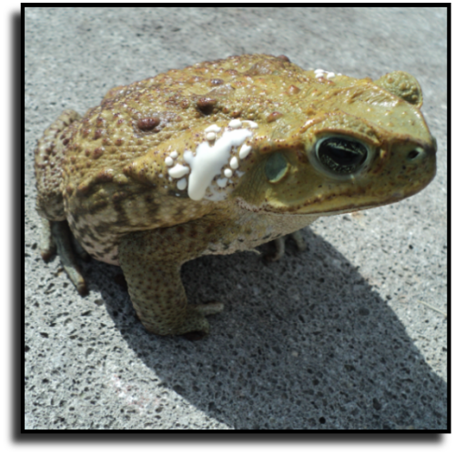 North Port, FL Toad Control Service