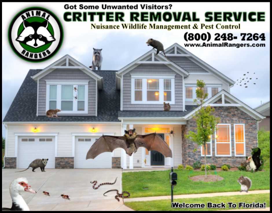 Florida Nuisance Wildlife Control & Animal Removal Services