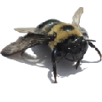 Florida - Bee Removal Service