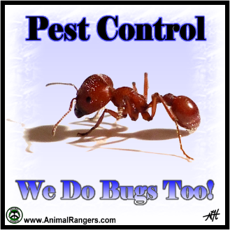 Golden Beach, FL Pest Control Services