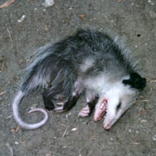 Martin County Dead Animal Removal Service Fl Animal Control